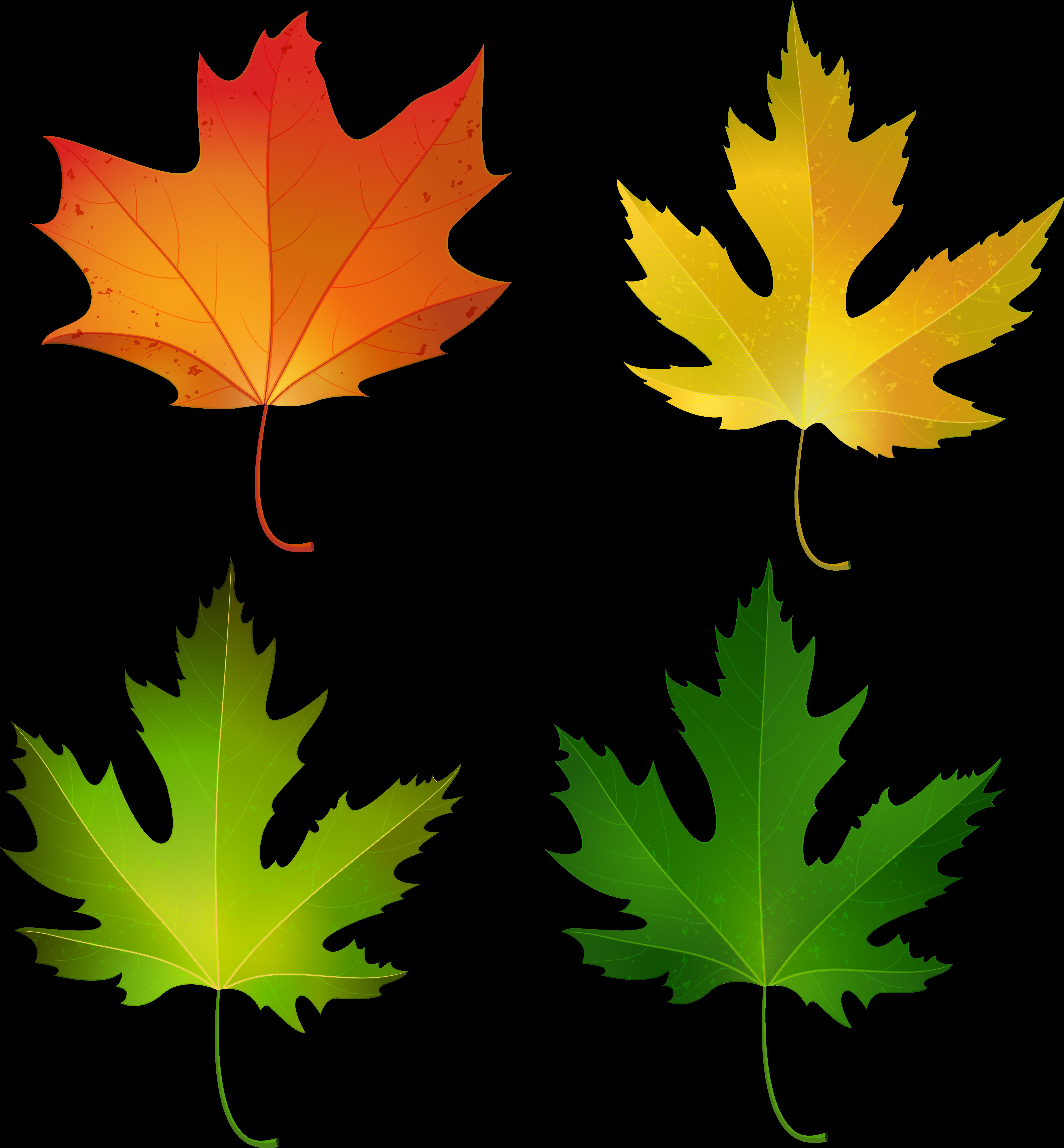 кленовые листья цветные картинки для вырезания больших размеров сразу оленеводами-то сравнивать