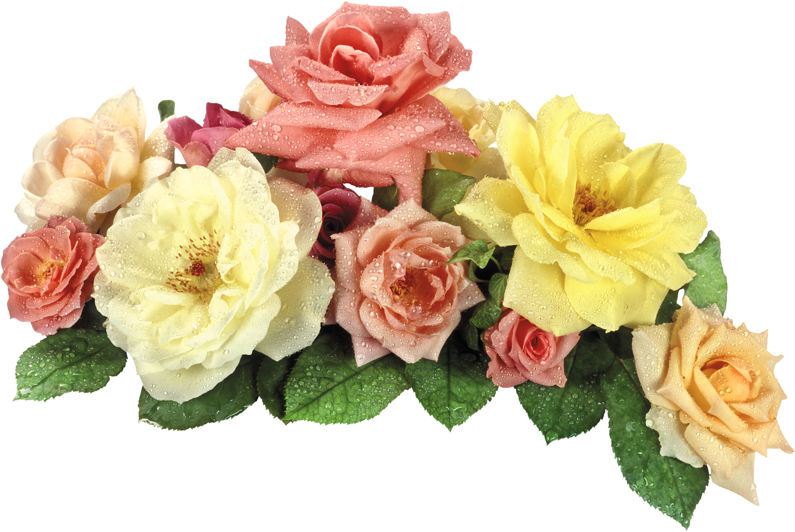 Download View Full Size Png Format Flower Png Hd Png Image With No