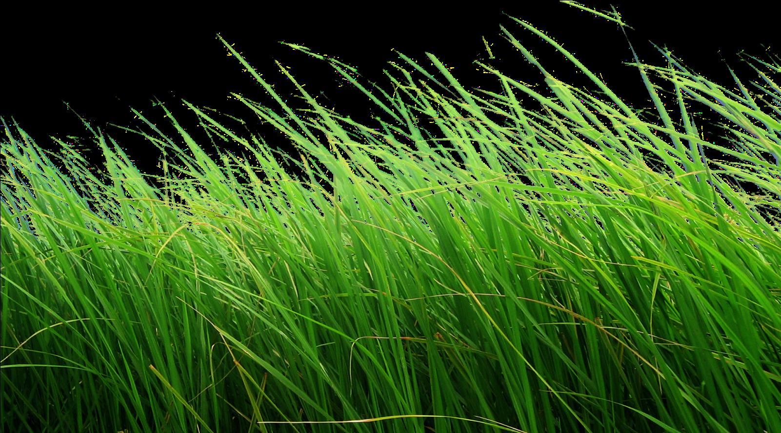 Download Cb Editing Flower Grass Png - Grass Png Transparent