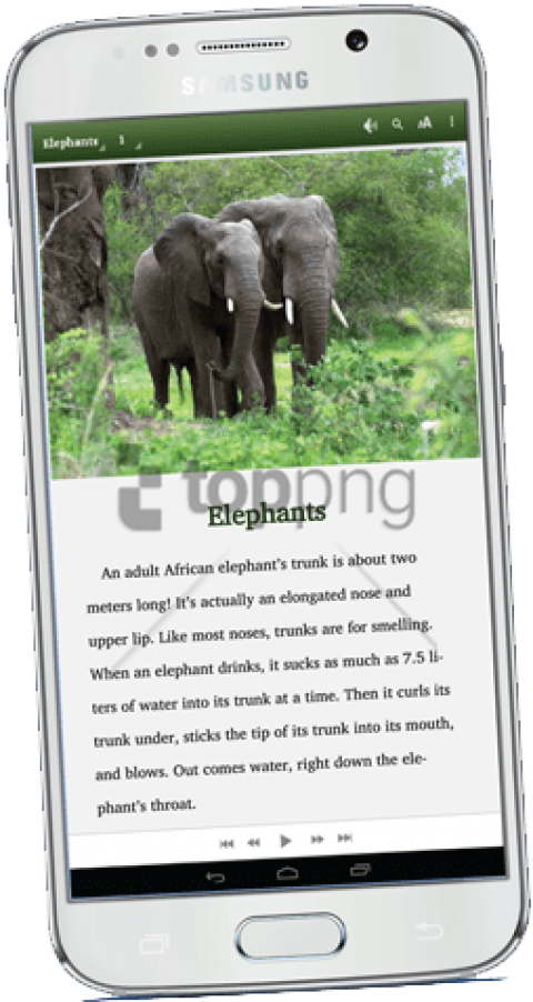 Supplying And Maintaining Well Stocked, Age Appropriate - Pair Of Elephants (277x500), Png Download
