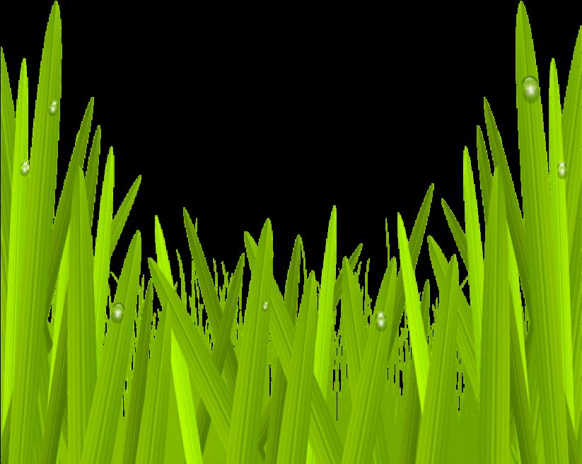 green grass png - 823×656