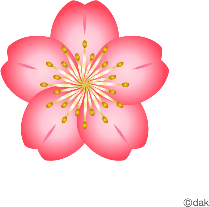 Cherry Blossom Flower Clipart (500x500), Png Download