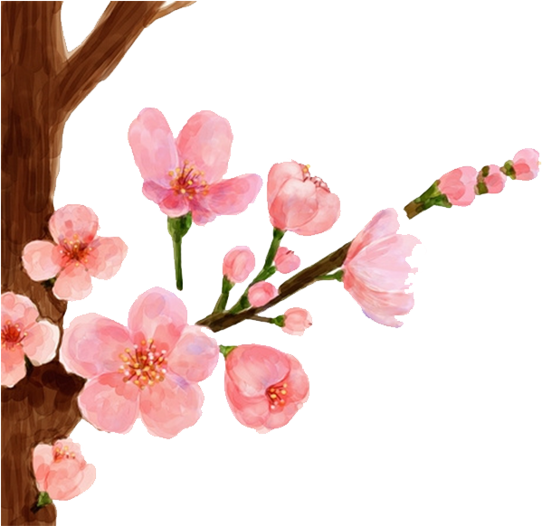 Cherry Painting Spring Peach - Peach Blossom Flower Drawing (658x658), Png Download