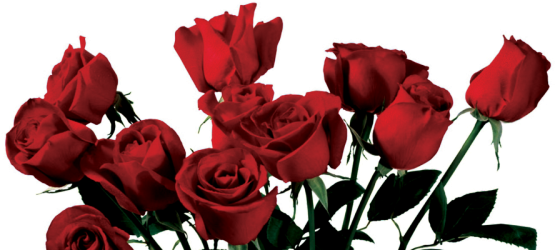 Download Drawn Wildflower Anime Red Roses Aesthetic Png Png Image With No Background Pngkey Com