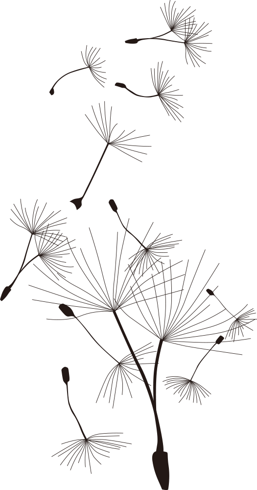 Download Common Dandelion T Shirt Cartoon Desenhos De Dente De
