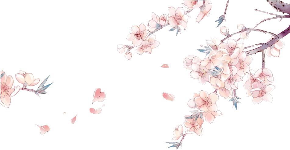 Drawn Cherry Blossom China - Cherry Blossom Flower Anime (951x500), Png Download