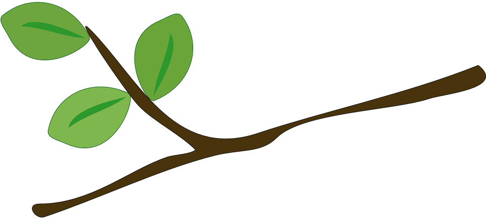 Download Branch Cartoon Png Image With No Background Pngkey Com