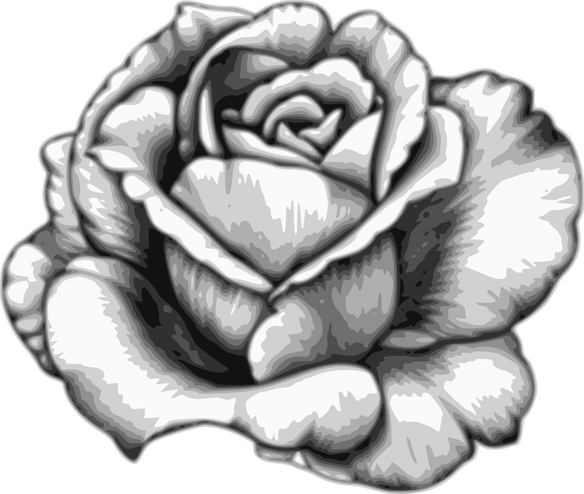 Download Drawing Flower Watercolor Black White Rose Fleur Dessin